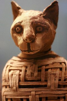 Egyptian cat mummy with amazingly complex wrappings