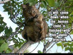 https://i.pinimg.com/236x/4d/d1/44/4dd144e9592528af431d158907d1af43--parent-information-night-music-humour.jpg
