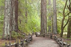 Camping in Santa Cruz, California offers a wide variety of environmental sights like the redwood forest, beaches, and great attractions like the beach side amusement park. Check out this guide to camping in Santa Cruz to learn more!