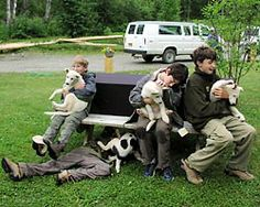 Sun Dog Kennel - Talkeetna Alaska (Kennel for Iditarod dogs!)