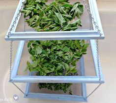 Picture frames with screen-door mesh inserted as drying rack. Would use for lingerie drying rack in laundry room, not herbs!