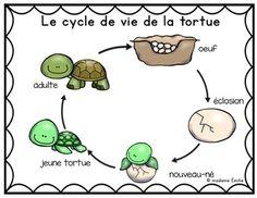 Reptiles, Sea Turtle Life Cycle, Ocean Words, Sea Animal Crafts, Kindergarten, Ocean Unit, Stem Projects, Science, Cat Sitting