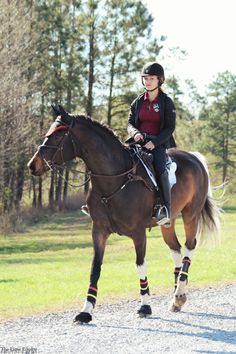 winter ride | Equestrian | Pinterest | Horse, Dressage and Animal