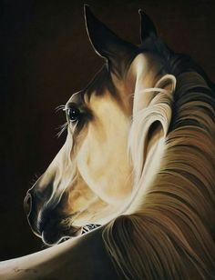 Exciting Learn To Draw Animals Ideas. Exquisite Learn To Draw Animals Ideas. All The Pretty Horses, Beautiful Horses, Horse Drawings, Animal Drawings, Horse Artwork, Horse Portrait, Animal Totems, Equine Art, Horse Pictures