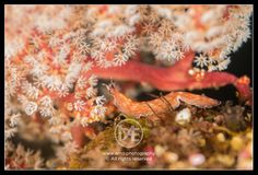 Nudibranch   © Arno Enzerink / www.stockphotography.nu. All rights reserved.