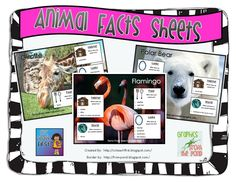 Animal Fact Sheets FREEBIE!  Students write a report on an animal and their habitat using these fact sheets.