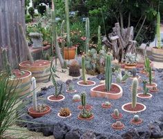 Ricreare un habitat in un giardino di piante grasse