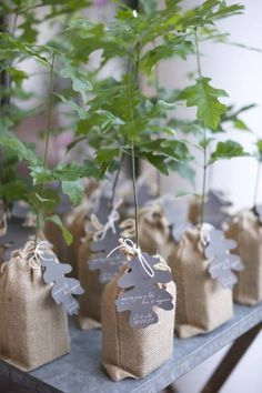 I love favors that could last for a long time and an oak tree can last for hundreds of years. Plus, with our ozone layer in crisis, the earth will be grateful for all the help that it can get and we will benefitf from the extra oxygen too.