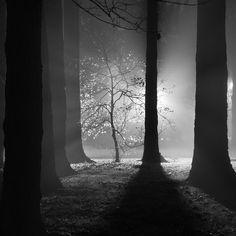 sapling by thespeak, via Flickr