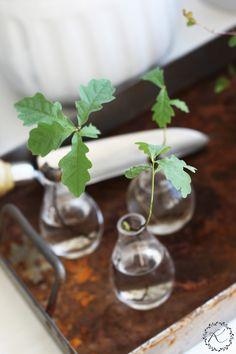 KUKKALA: #oak #tammi #quercusrobur