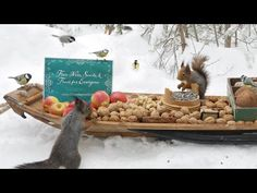 The Traveling Bird Feeder - Relax With Squirrels & Birds ( 1 Hour ) Willow Tit, Coal Tit, Greenfinch, Calming Sounds, Spotted Woodpecker, Perfect Tv, Great Tit, Winter Survival, Relaxation Meditation