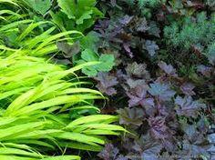 plant groupings with heuchera - Google Search