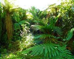 imagini din jungla - Căutare Google Herbs, Google, Plants, Herb, Plant, Planets, Medicinal Plants