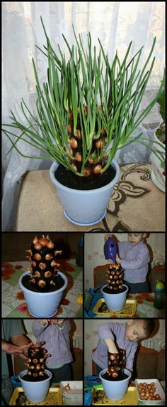 Learn How To Make A Vertical Onion Planter  http://theownerbuildernetwork.co/scfb  Growing onions can be fun and easy with this vertical onion planter, and it's made from repurposed plastic bottles.