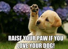I know lots of paws are raised out there... :)