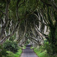 Froot Ierland Emerald Isle fotoserie