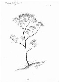 215 gum tree pen drawing Tree Line Drawing, Plant Drawing, Drawing Drawing, Maple Tree Tattoos, Pine Tree Tattoo, Nature Tattoos, Body Art Tattoos, Tree Sketches, Tree Drawings