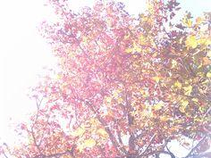 こんにちは☆ 神戸の街は紅葉が始まっています♪ 今日は阪神タイガースファンのお客様たくさんのご来店誠に有難うございます♡ 昨日の勝利には感極まりました(T_T) 11年前のようにまた三宮でのパレードが見たいです☆ 日本一なったら当店も何かしなくては(笑) 秋企画めまぐるしい日々に活力がみなぎります。 間もなく秋企画順次ご案内致します。お楽しみに♡