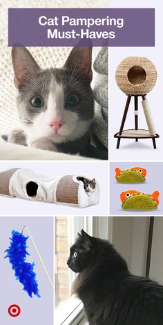 Discover ideas to pamper your fur baby. From cute cat furniture & trees to toys treats & other kitty stuff. Discover ideas to pamper your fur baby. From cute cat furniture & trees to toys treats & other kitty stuff. Cute Cats And Kittens, I Love Cats, Crazy Cats, Cool Cats, Kittens Cutest, Siamese Kittens, Cute Funny Animals, Cute Baby Animals, Animals And Pets