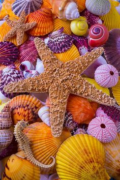 Sea Shells Sea Urchins Seanails Starfish Seahorse – Bahri Ermis – Join the world of pin Iphone Wallpaper Ocean, Summer Wallpaper, Colorful Wallpaper, Nature Wallpaper, Wallpaper Backgrounds, 3d Wallpaper, Orange Aesthetic, Starfish, Pretty Wallpapers