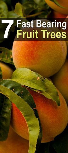 7 Fast Bearing Fruit Trees | Trees that Grow Fruit | Grow Your Own Fruit | Frugal | Homestead