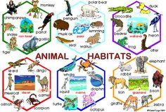 habitat de animales | UNIDAD UNO:¿COMO VIVEN LOS SERES VIVOS?