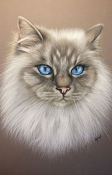 Art Drawings Sketches, Animal Drawings, Image Foto, Kitten Drawing, October Art, Frida Art, Lion Painting, Color Pencil Art, Pastel Art