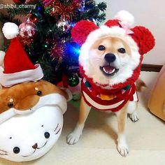 X'mas beanie ✨ フォトコン女王♥ゆりちゃんママさんから教えていただいたやり方『まわりをぼかす』をやってみた( ̄∇ ̄*)ゞ #どーでしょー!笑 #1枚目✨いつもよりお洒落な感じに仕上がったかなぁ~( *´ω`* ) #2枚目はふつうに… #クリスマス #PECOクリスマス