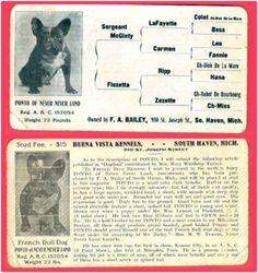 French Bulldog Stud Card, Ponto of Never Never Land, 1916