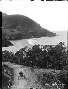 Historic photo of Stanwell Park Beach. Horse & Cart for transport in the foreground.