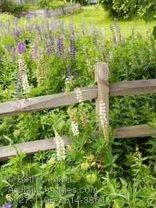 split rail fence flowers