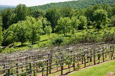 Virginia - Monticello Vineyard