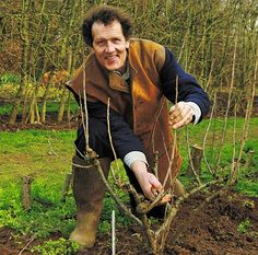 Monty says home-grown red, white and black currants are an absolute treat (how to grow, including pruning, currants and gooseberries)