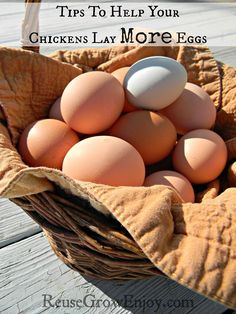 Tips To Help Your Chickens Lay More Eggs