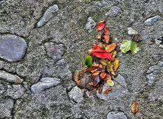 street autumn - null