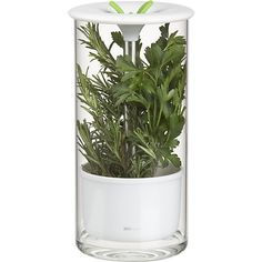 $19.95 Glass Herb Keeper in Summer Kitchen Must Haves | Crate and Barrel