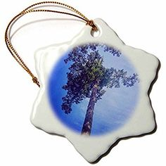 3dRose DYLAN SEIBOLD - PHOTOGRAPHY - SKY REACHING TREE - 3 inch Snowflake Porcelain Ornament (orn_245700_1)
