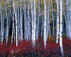 Cascade Springs, Uinta National Forest
