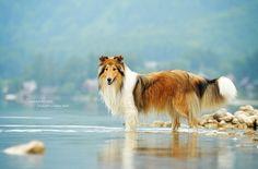 Beauty in the lake by Anne Geier