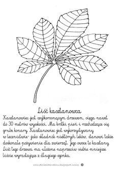 Liść kasztanowca www.dzieciakiwdomu.blogspot.com