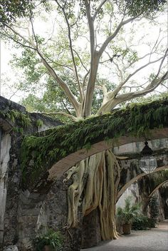 The indomitability of nature. Hacienda de Cortes in Cuernavaca / Mexico (by starobs).