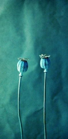 Poppy Pods ~ Teal