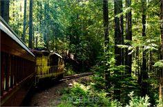 The Skunk Train, Fort Bragg CA
