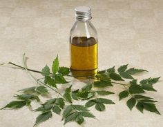 Neem oil is a naturally occurring pesticide loaded with nutrients. It's also used in natural skin care because it contains high levels of antioxidants. Herbal Remedies, Home Remedies, Natural Remedies, Health Remedies, Psoriasis Remedies, Neem Oil For Hair, Hair Oil, Natural Skin Care, Natural Health