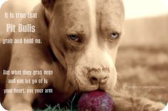"The eyes of the ""Pit Bull"" reveals their true nature. Judge the Deed, NOT the Breed. 