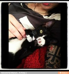 Andy Biersack and his cat