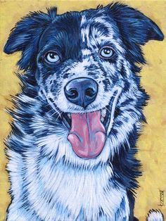 Bonzer the Australian Shepherd and Border Collie Mixed Breed by Bethany