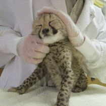 """Adorable Animal Gifs To Get You Through Finals Week 