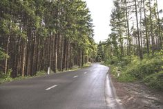 Poster & Download: Wald Straße Baum Grün Holz natur Kategorien: landschaften, wald, straße, baum, grün, holz, natur
