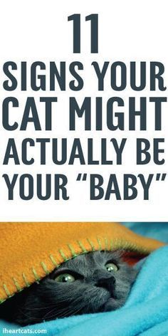 """11 Signs Your Cat Might Actually Be Your """"Baby"""""""